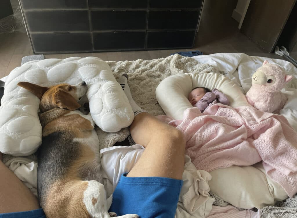 Photo baby with dog sleeping
